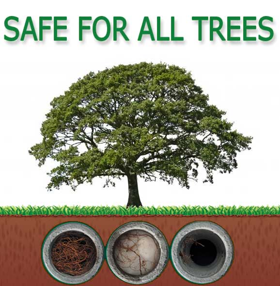 RootX is safe for all trees